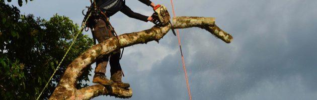 tala de árboles en galicia