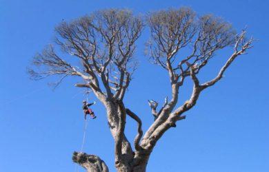 poda en altura - treeclimbing
