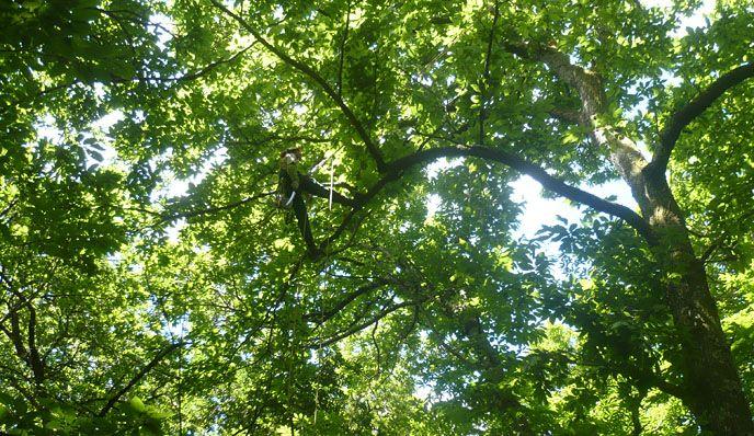 consultoria-arboricultura