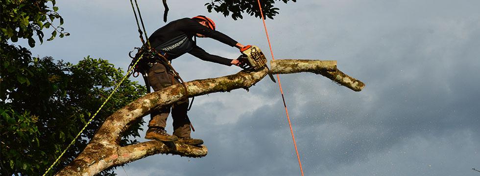 tala de árboles_poda en altura tree climbing