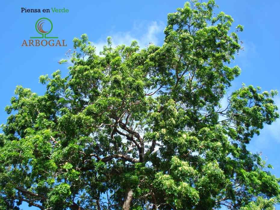 Arbogal, piensa en verde