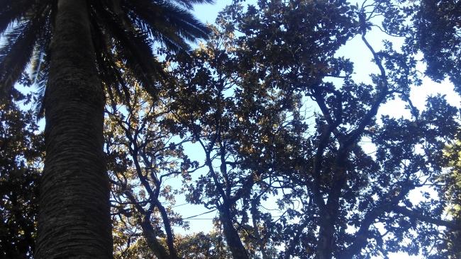 Sujeción árbol