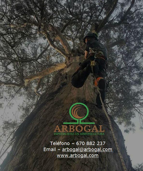 Dossier Arbogal