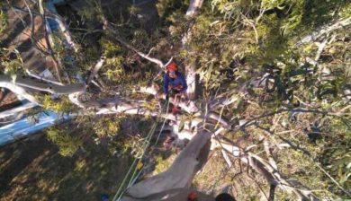 tree climbing trabajos-de-poda-en-altura-arbogal-2017