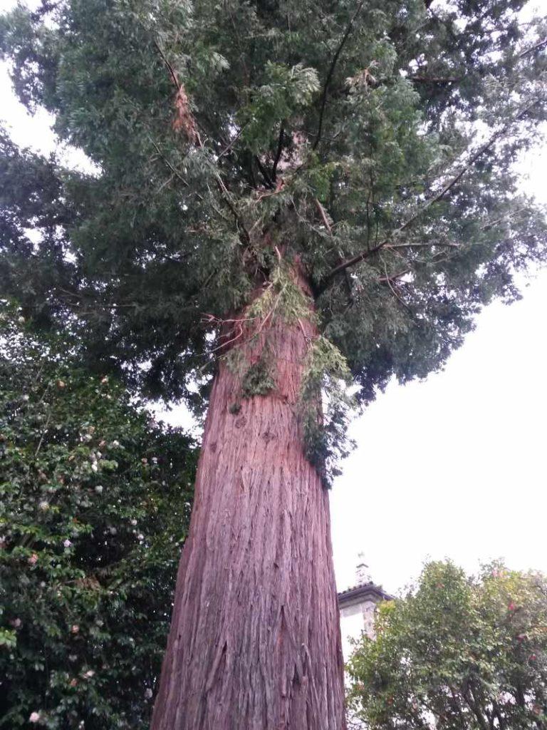 sequoia_valoracion_arbolado