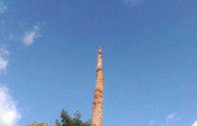 tala-controlada-valoracion-arbolado tala de arboles por secciones en Galicia