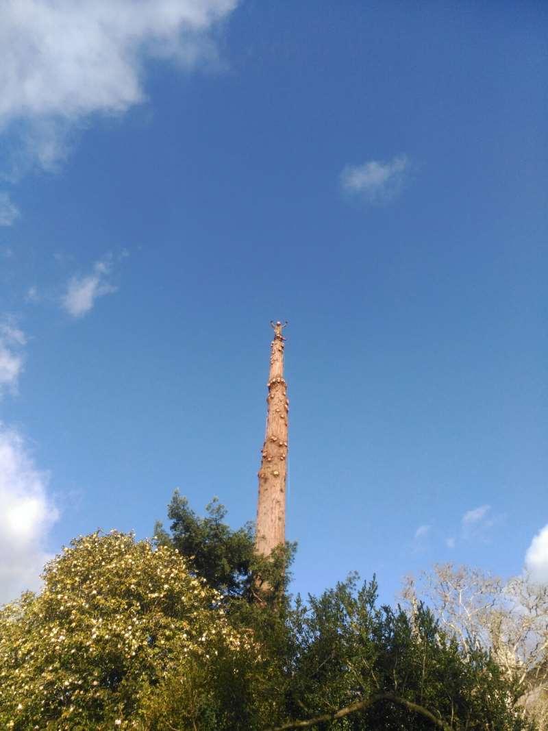 Tala de árboles por secciones en Galicia