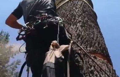trabajos de arboricultura