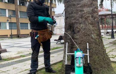 tratamiento de endoterapia en palmeras