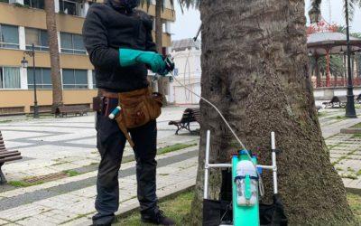 Protocolo de actuación en palmeras