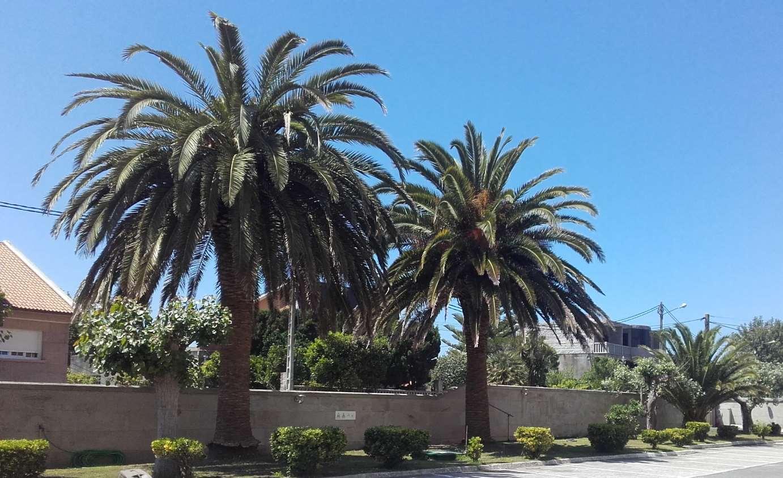 picudo rojo en palmeras con arbogal